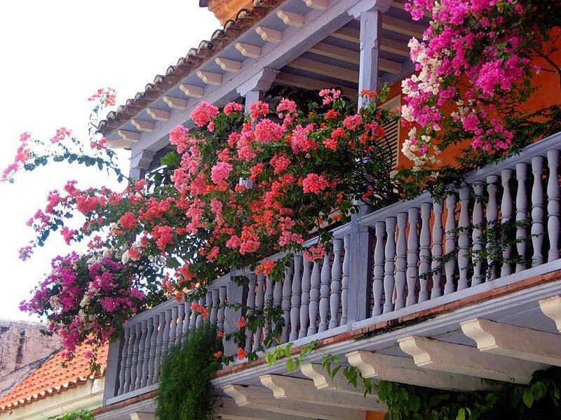Какие цветы посадить на балконе?.
